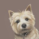 Cairn Terrier - Delightful Dave by bydonna