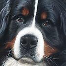 Bernese Mountain Dog - Jesse by bydonna