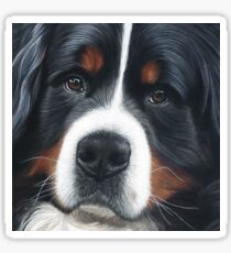 Bernese Mountain Dog - Jesse Sticker