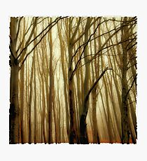 the mystic forest Photographic Print