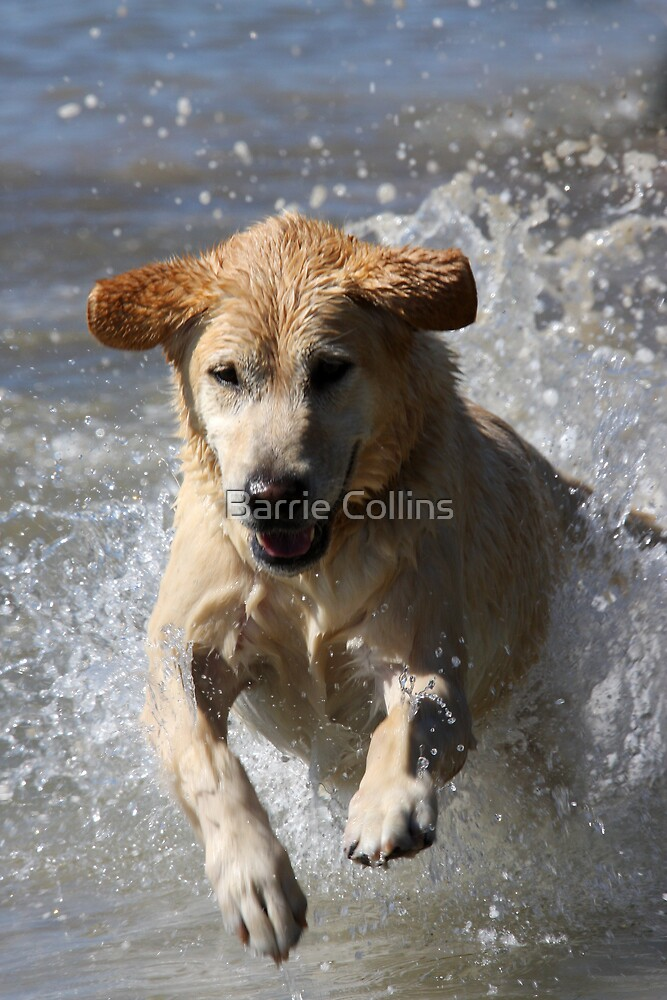 Montie the wonder dog! Shame it isn't true by Barrie Collins