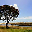 Pohutukawa Tree, Spirits bay, New Zealand by Victoria Ashman