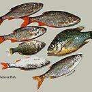Various Fish by Hank Stallings