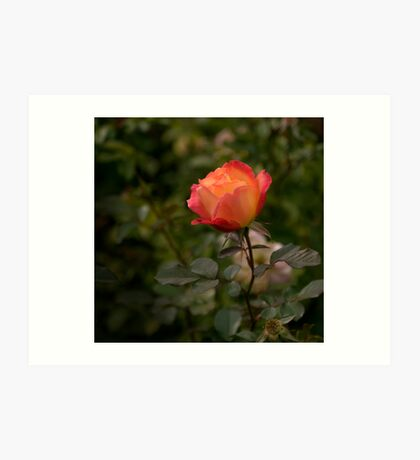 Still Young and  Beautiful Art Print