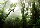 Cloud Forest by Nicklas Gustafsson