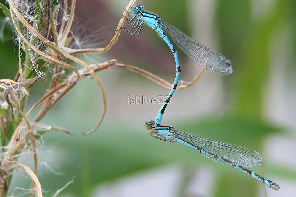 Mating Season by isblue23