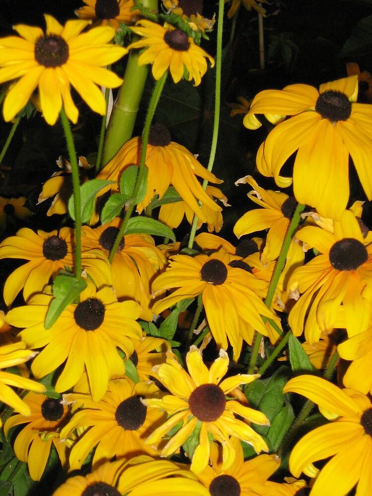 Yellow Flowers by Sarah Niemi