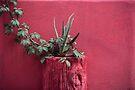 Rosa und Pflanze von josemanuelerre