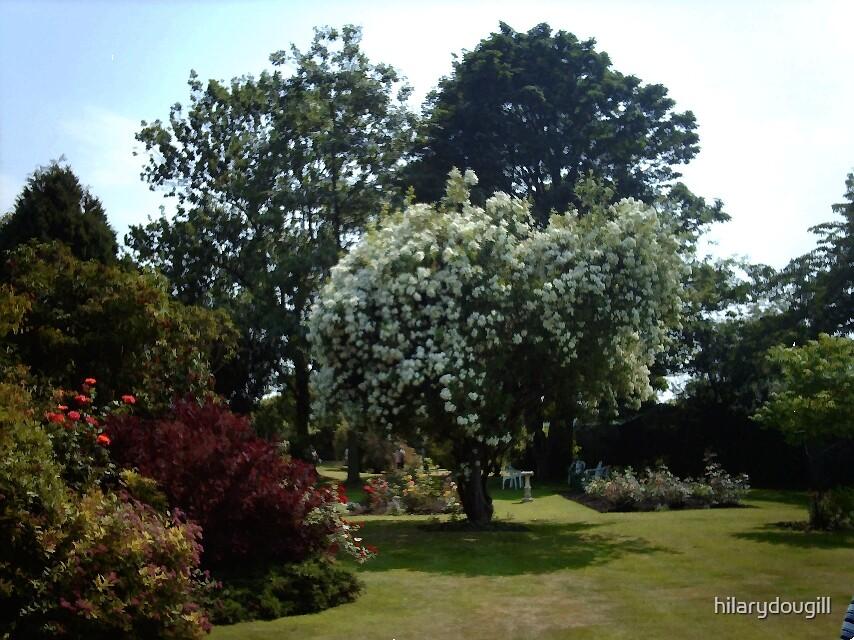 Garden of Serenity by hilarydougill