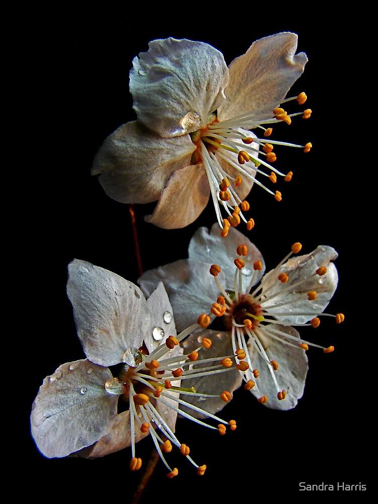 Memories of Spring by Sandra Harris