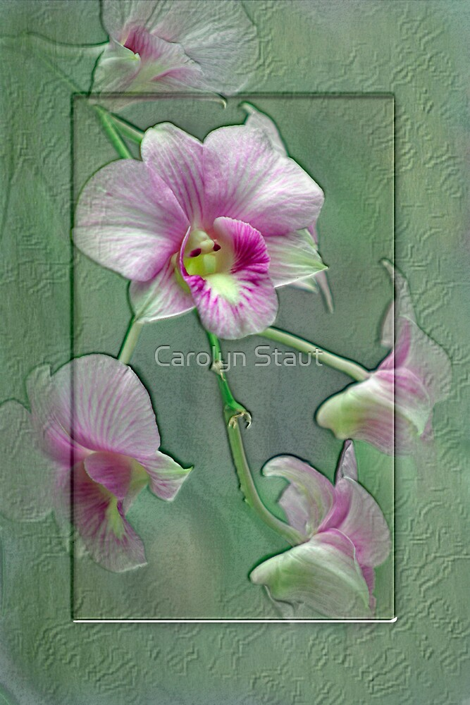 Orchid Orchid by Carolyn Staut