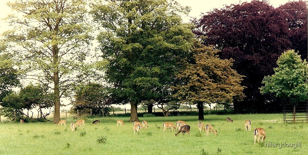 Deer in Whitworth Park by hilarydougill