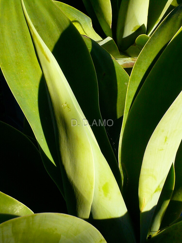 Green Leaves by D. D.AMO