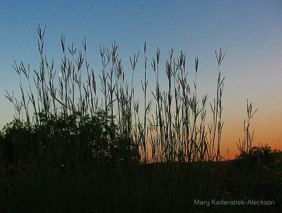 Native Grasses in the Sunset by Mary Kaderabek-Aleckson