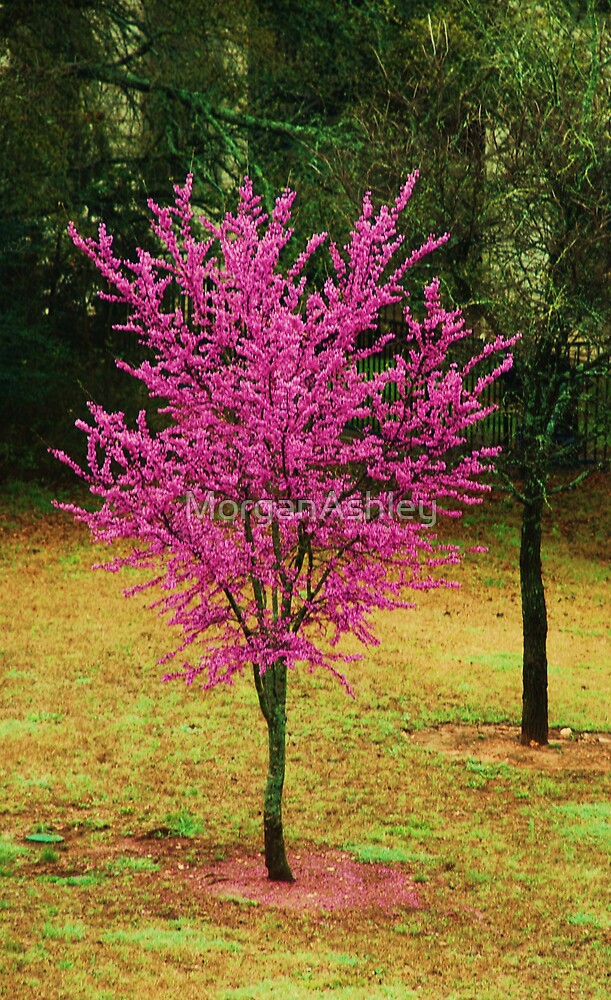 pink tree by MorganAshley