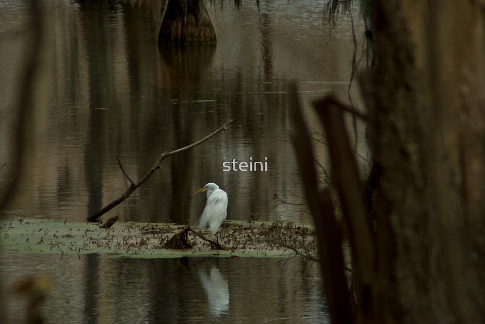 Egret-3741 by steini