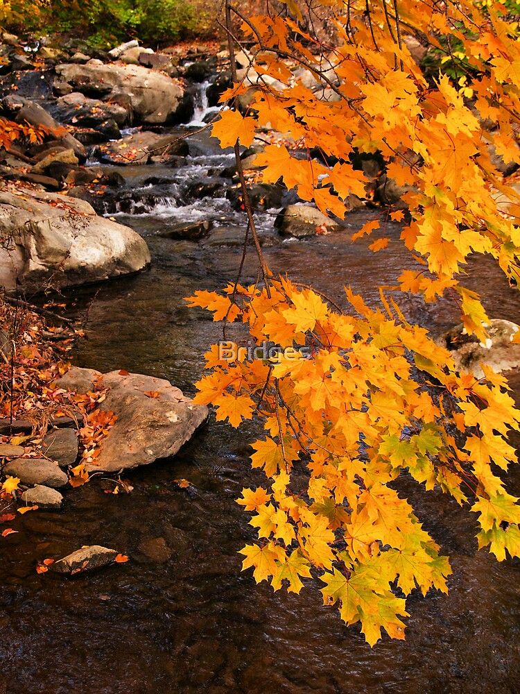 A Stream in Fall by Bridges