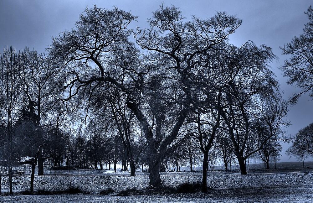Veins of Ice by John Heil