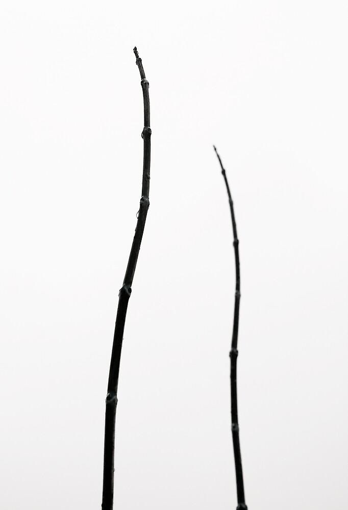 Minimal Nature by Ulf Buschmann
