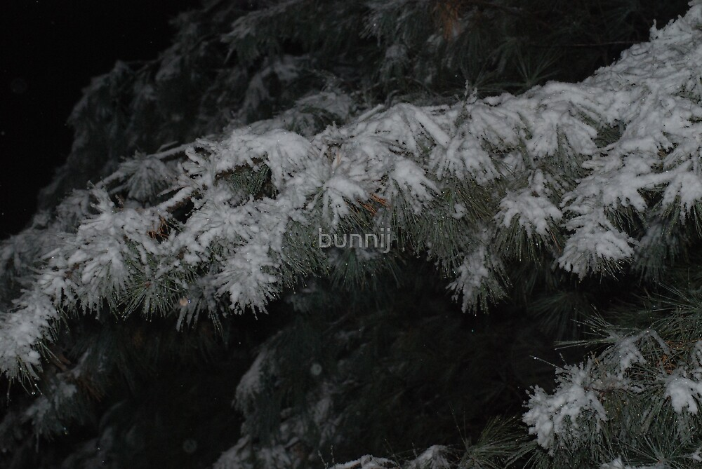 Snow Covered Bough by bunnij