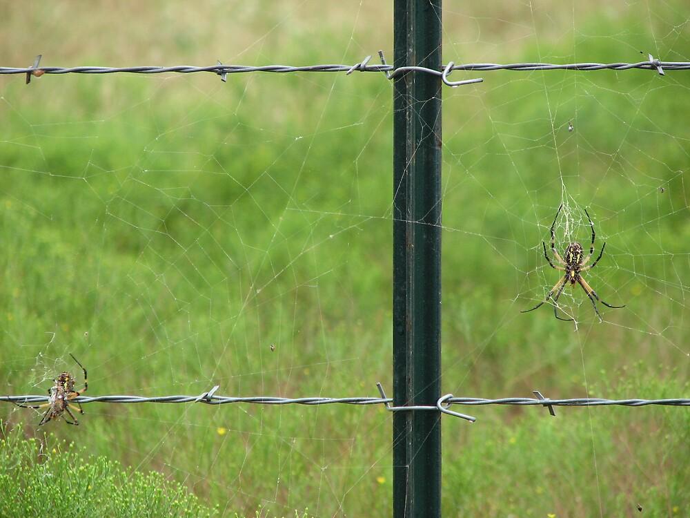 Spiders by SimplyAng