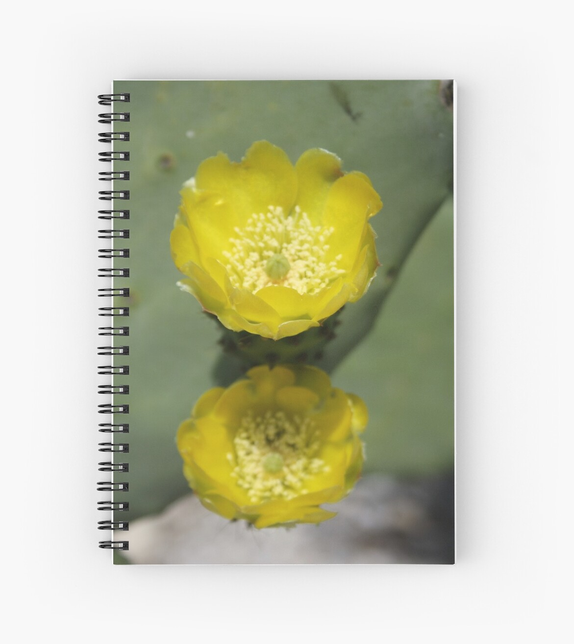 A Pair of Yellow Prickly Pear Flowers by taiche