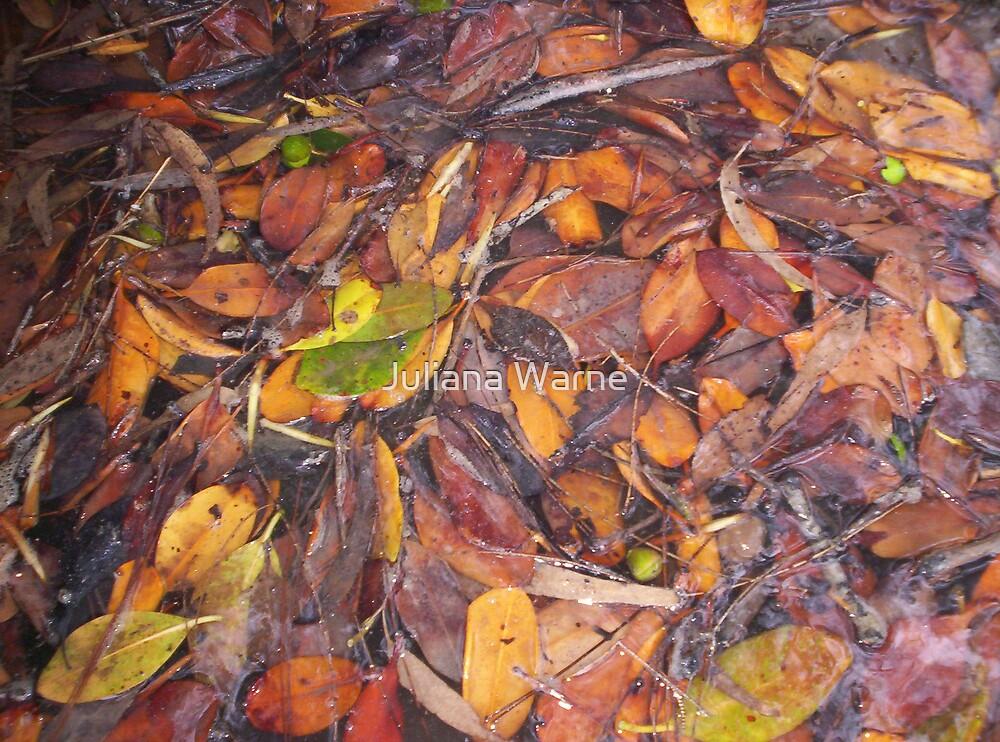 Mangrove leaves by Juliana Warne
