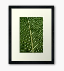 Green Tropical Rainforest Taro Leaf Veins Pattern Framed Print