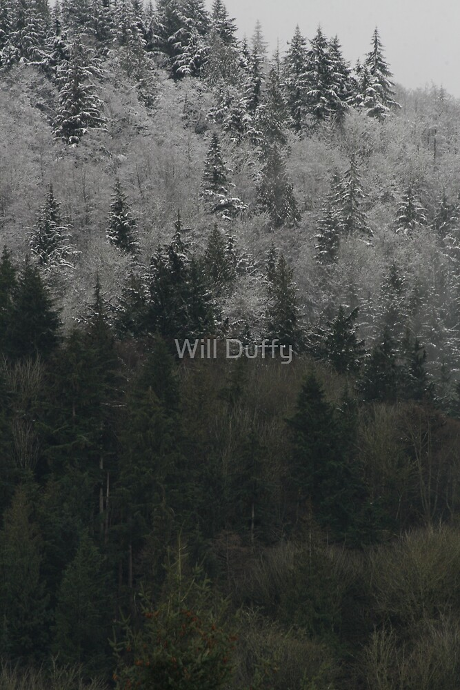 snow level by Will Duffy