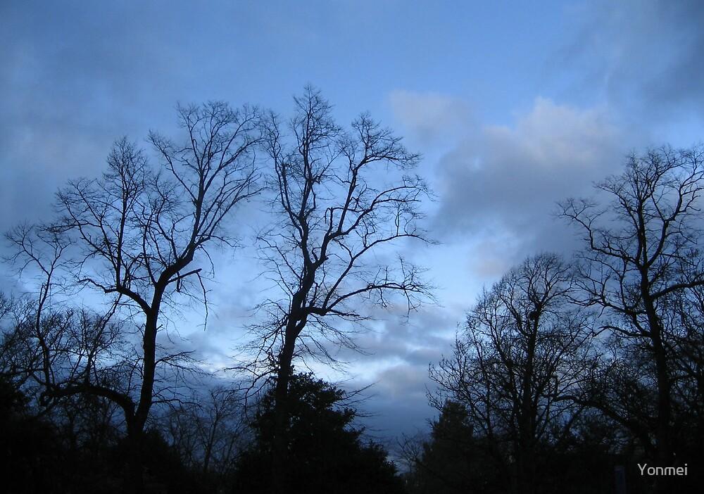 December trees by Yonmei