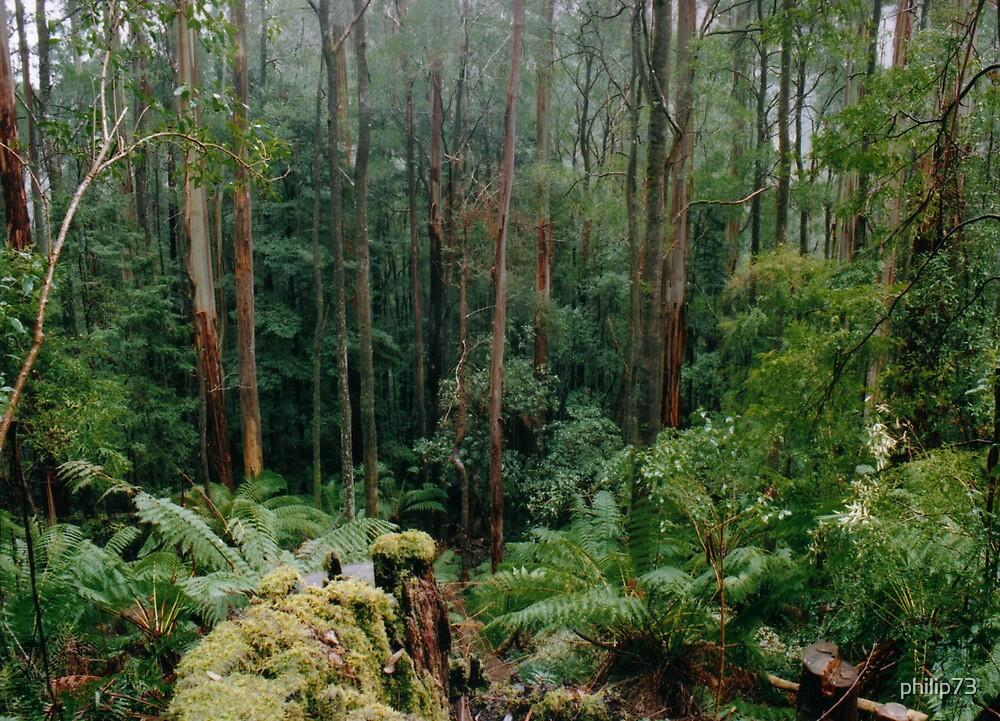 Otway Forest by philip73