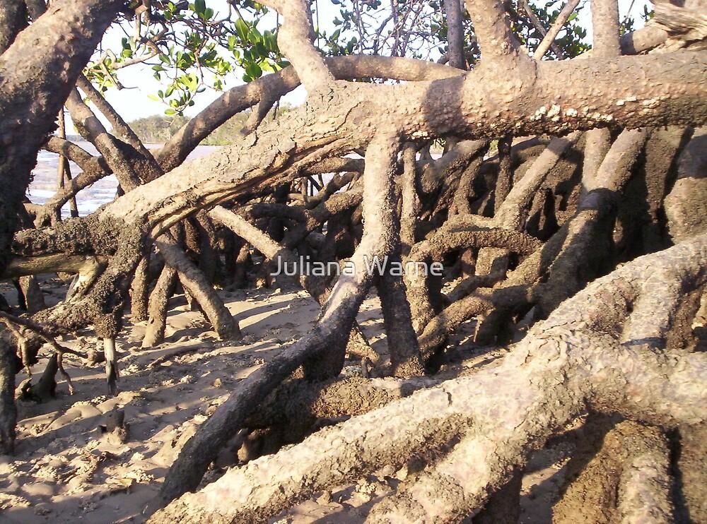 Mangroves by Juliana Warne