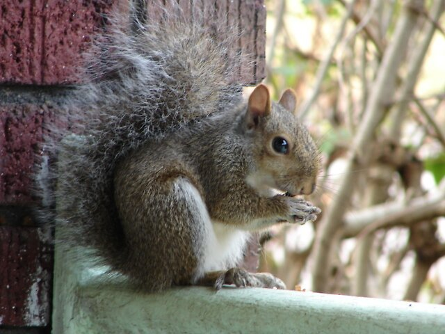 Baby Squirrel by inventor