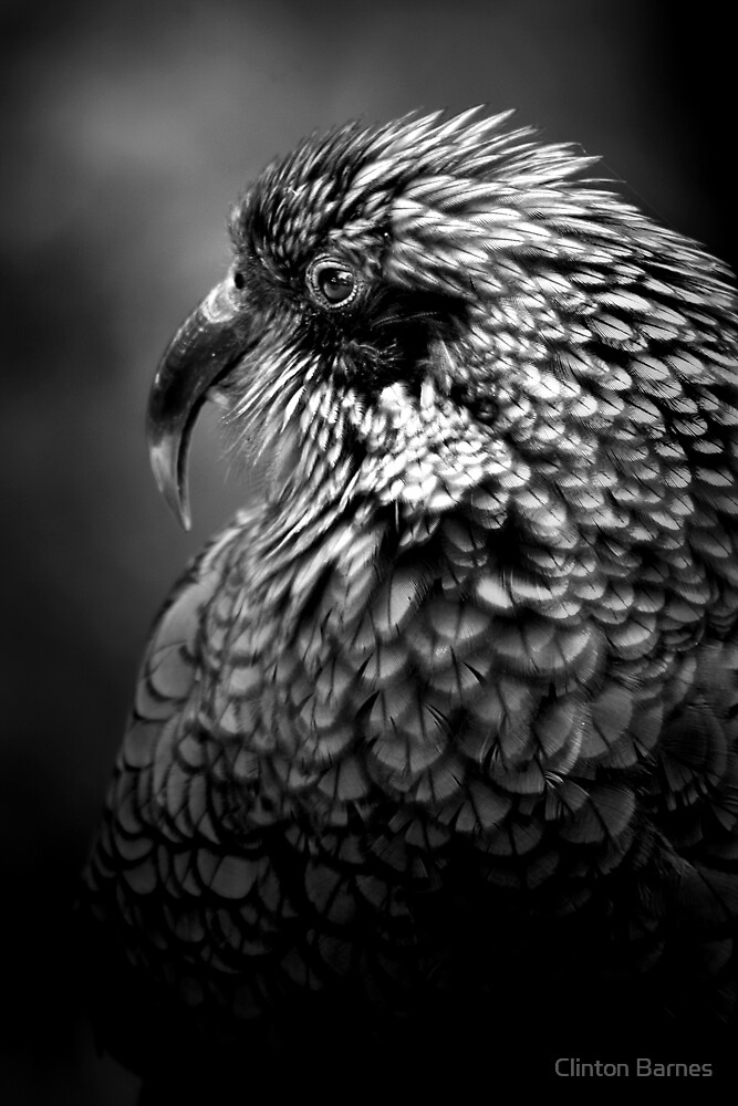 Kea by Clinton Barnes