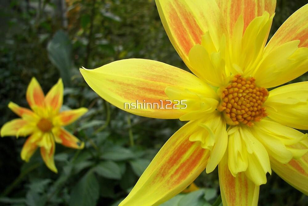 Flower by nshinn1225