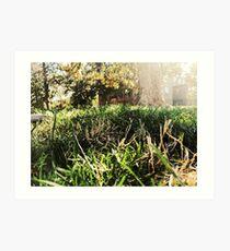 Grass, Trees, Sun, Picninc Art Print