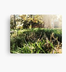 Grass, Trees, Sun, Picninc Canvas Print