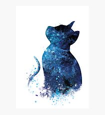Blue Cat Photographic Print