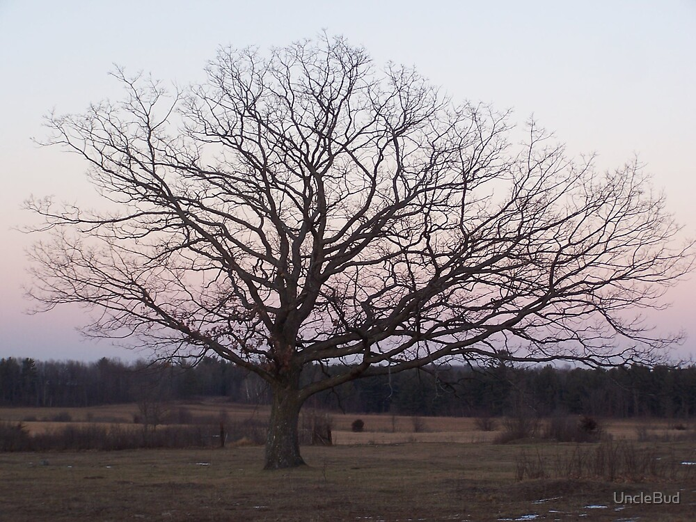 Bare Branches by UncleBud