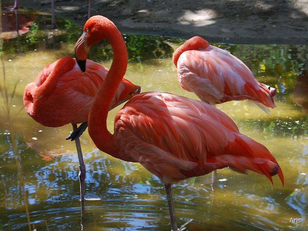 Flamingo by Aris