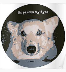 Corgi gaze into my eyes Poster