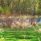 Yes Burt, I think it's really spring! by Nadya Johnson