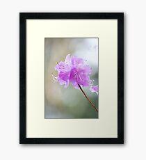 Rhododendron Purple Haze Framed Print