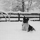 Snow dog (North Saanich, Vancouver Island, British Columbia, Canada) by Edward A. Lentz