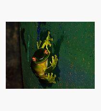 Kermit Impression Photographic Print