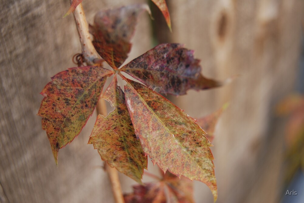 Fall Feelings by Aris
