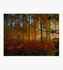 Sunrise in the Forest Photographic Print