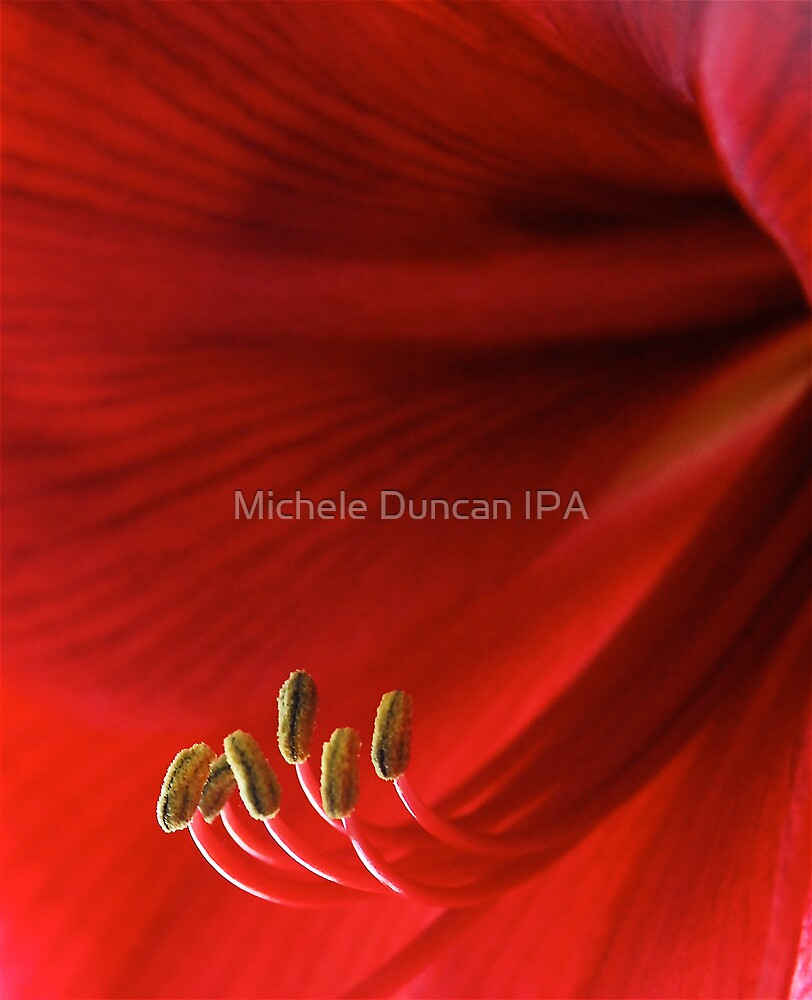 Into The Light by Michele Duncan IPA
