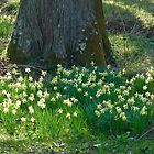 SPRING HAS SPRUNG by Marilyn Grimble