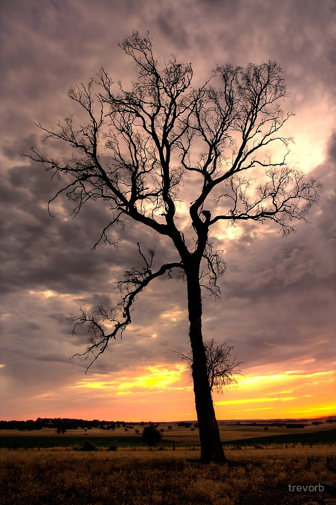 Evening Light. by trevorb